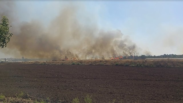 שריפה בן יער ברקת לגבעת כוח (צילום: יערה לוי)