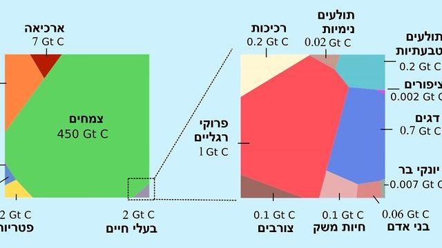 משקל החיים: החלק היחסי של ממלכות ומינים בביומסה הכללית של כדור הארץ, בג'יגה-טון פחמן (אינפוגרפיקה: מכון ויצמן למדע)