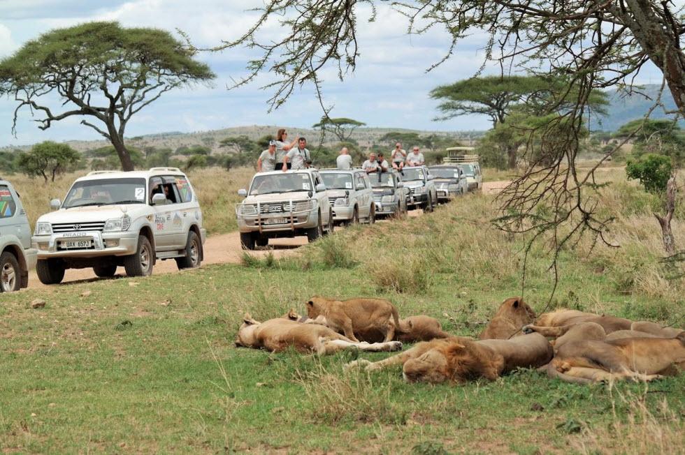 הכי קרוב לאריות (צילום: גליה ברקאי)