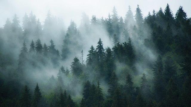 אילוסטרציה יער (צילום: shutterstock)