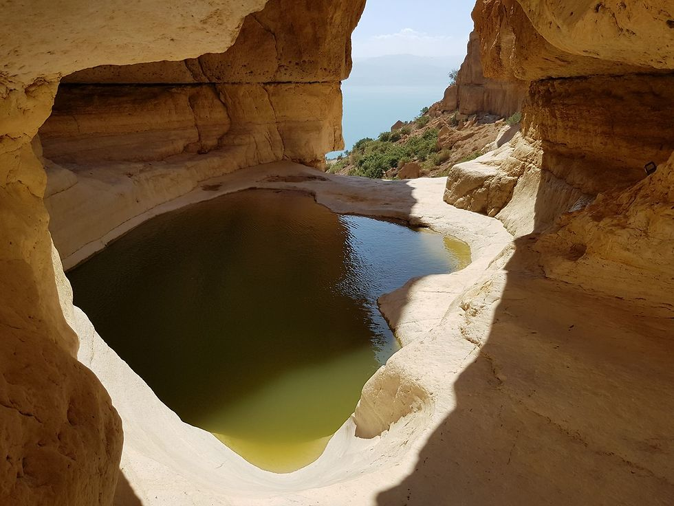 גב החלון בנחל דוד (צילום: יואב עצמוני)