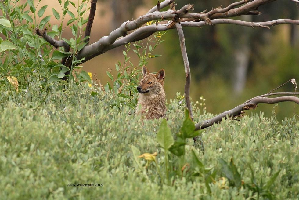תן זהוב בפארק הירקון (צילום: אן וסרמן)