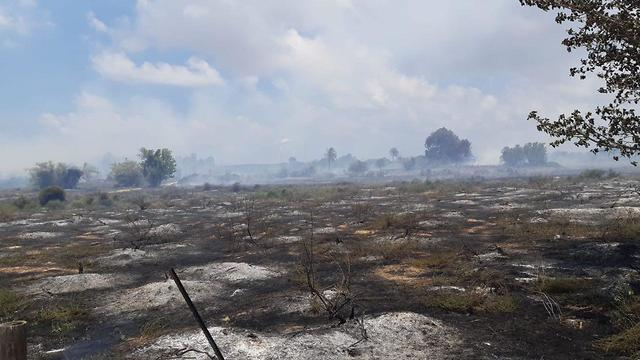 Damage from fire at Karmia Nature Reserve  (Photo: Tomer Ofri)