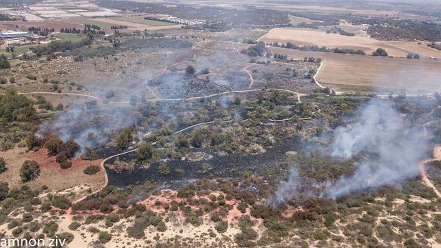 Fires across Karmiya Reserve amid incendiary kites flown from Gaza  (Photo: Amnon Ziv)