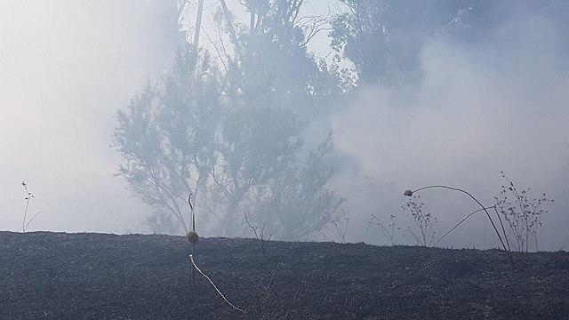 מועצה אזורית אשכול שריפה  (צילום: יואב זיתון)