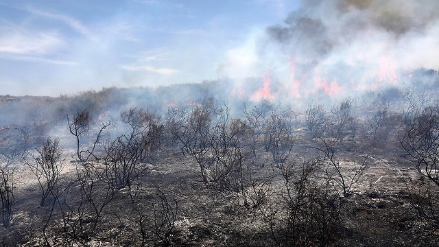 שריפה ליד קיבוץ אור הנר (צילום: EPA)