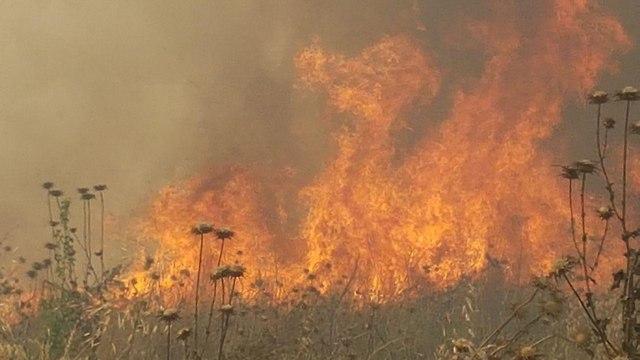 שריפה מועצה אזורית אשכול (צילום: יואב זיתון)