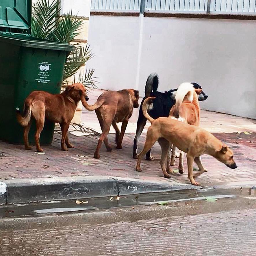 כלבים משוטטים ברחובות. הסכנה: מחלות ותקיפת בני אדם