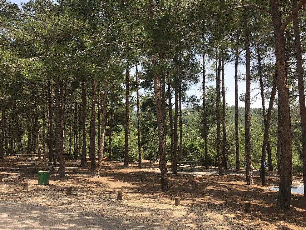 חניון חומה ומגדל ביער חניתה (צילום: יעל לרנר)