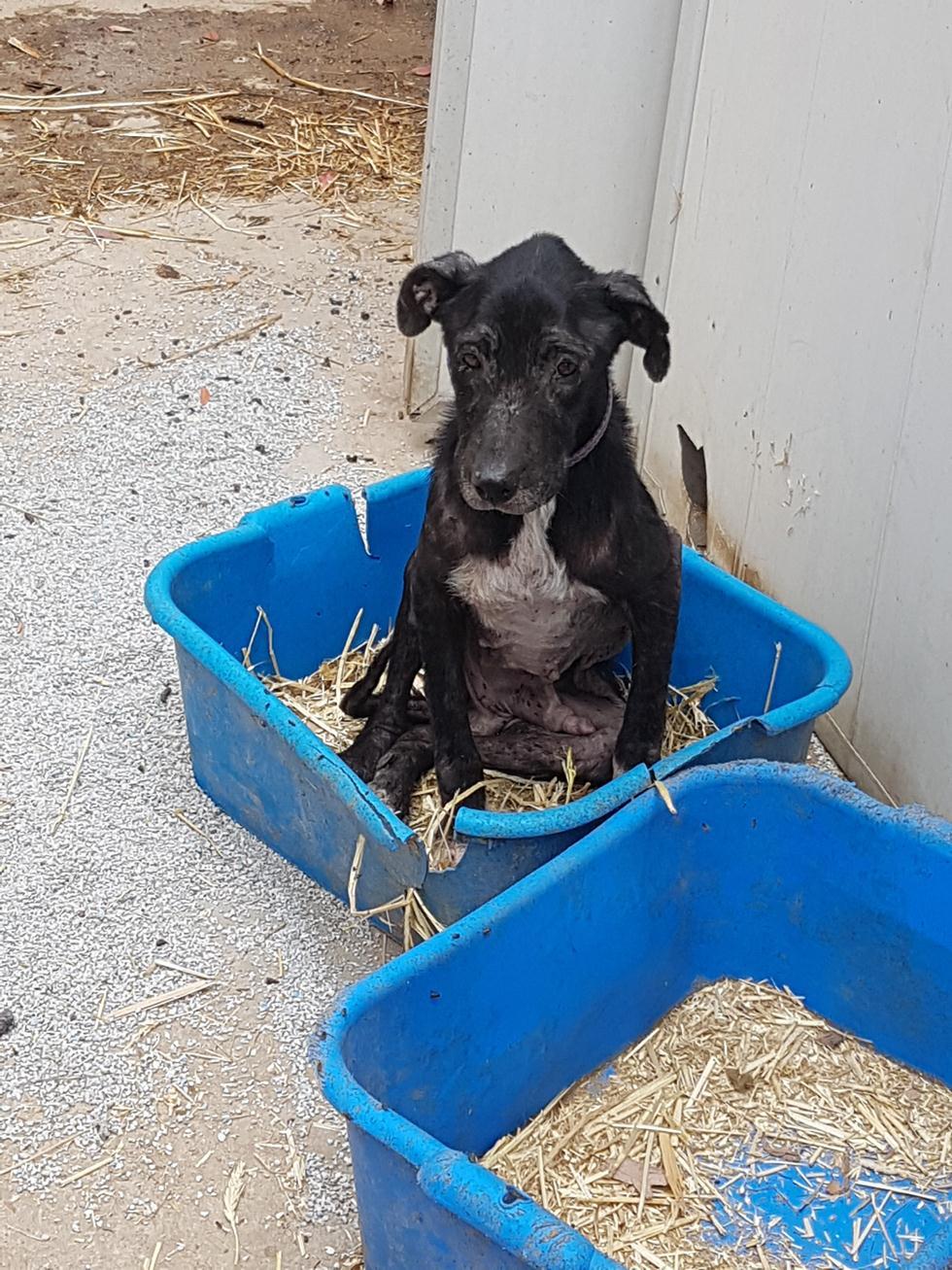 פינוי כלב מעמותה למען בעלי חיים (צילום: משרד החקלאות)