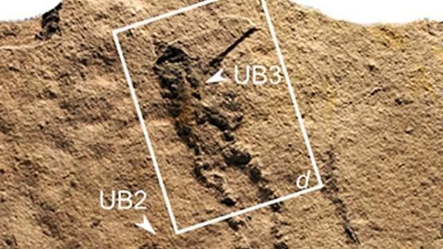טביעות הרגליים שהתגלו (צילום: מתוך המחקר)