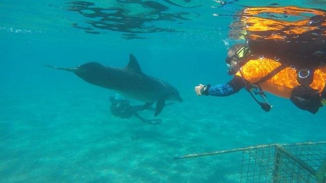 הדולפין בא לבקר (צילום: יחידת המתנדבים )