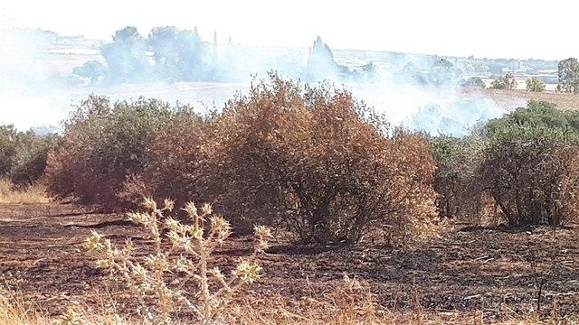 חורשה במפלסים עולה באש כתוצאה מבלון תבערה ()