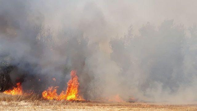 שריפה בעוטף עזה, שנגרמה מעפיפון תבערה (צילום: ביטחון אשכול)
