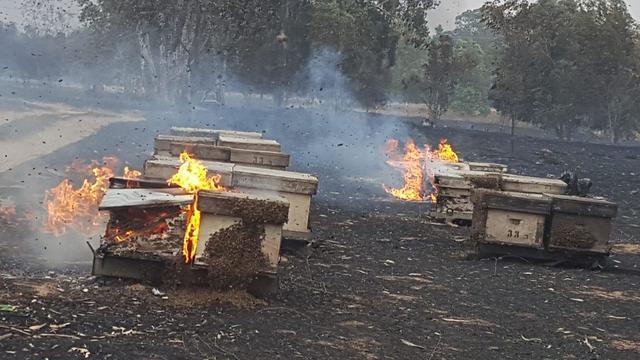 כוורות עולות באש (צילום:  רשות הטבע והגנים)