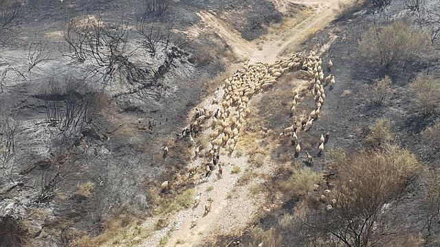 שטח חקלאי לאחר שריפה תל גמה  (צילום: בראל אפרים)
