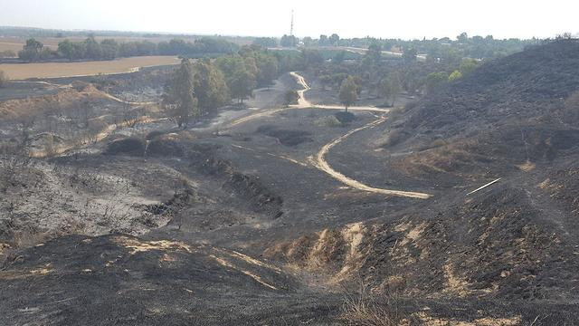 Burnt agricultural land earlier this year (Photo: Barel Efraim)