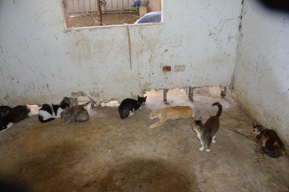 חתולים שהוחרמו מהעמותה (צילום: משרד החקלאות)