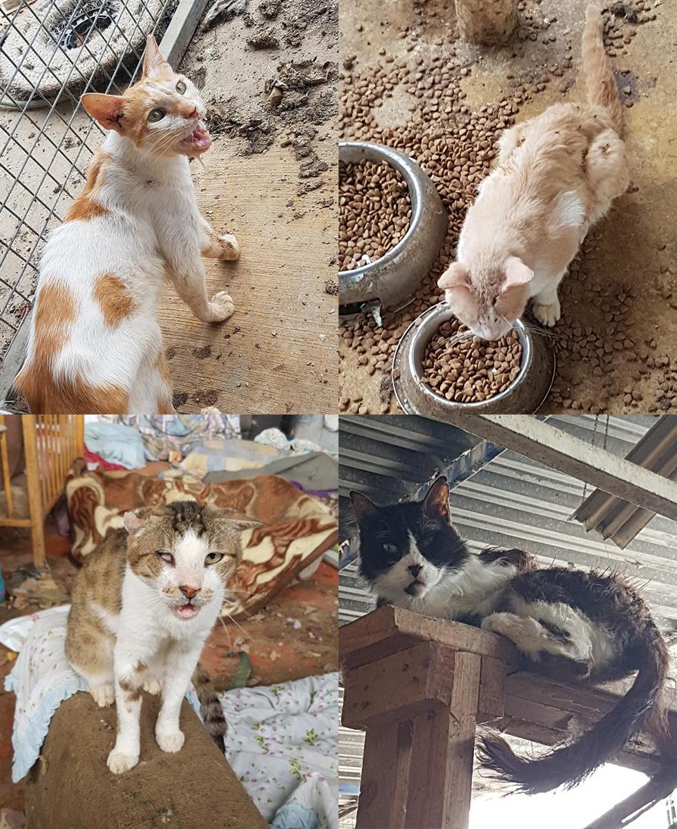 החתולים שהוחרמו מהעמותה (צילום: משרד החקלאות)