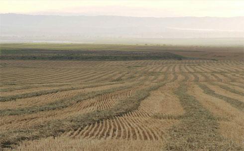 """נופים חקלאיים בסביבה המיועדת להקמת הכפר (באדיבות """"פלסנר אדריכלים"""")"""