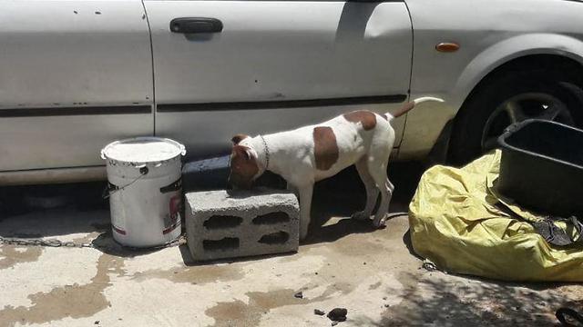 כלבים (צילום: דוברות משטרת ישראל)