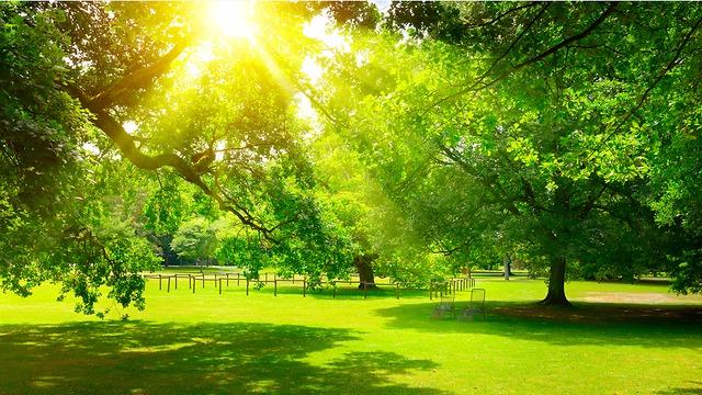 עצים בעיר (צילום: shuttertock)