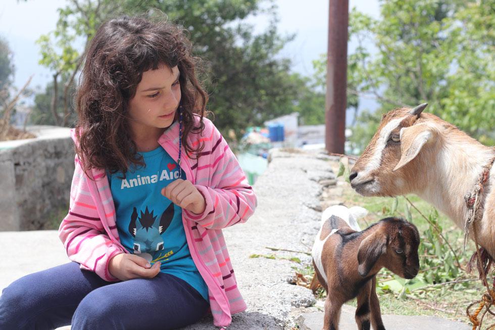 תמר בכפר קאסר דווי, משחקת עם העז והגדי של השכנים (צילום: אירית נצר קאופמן)