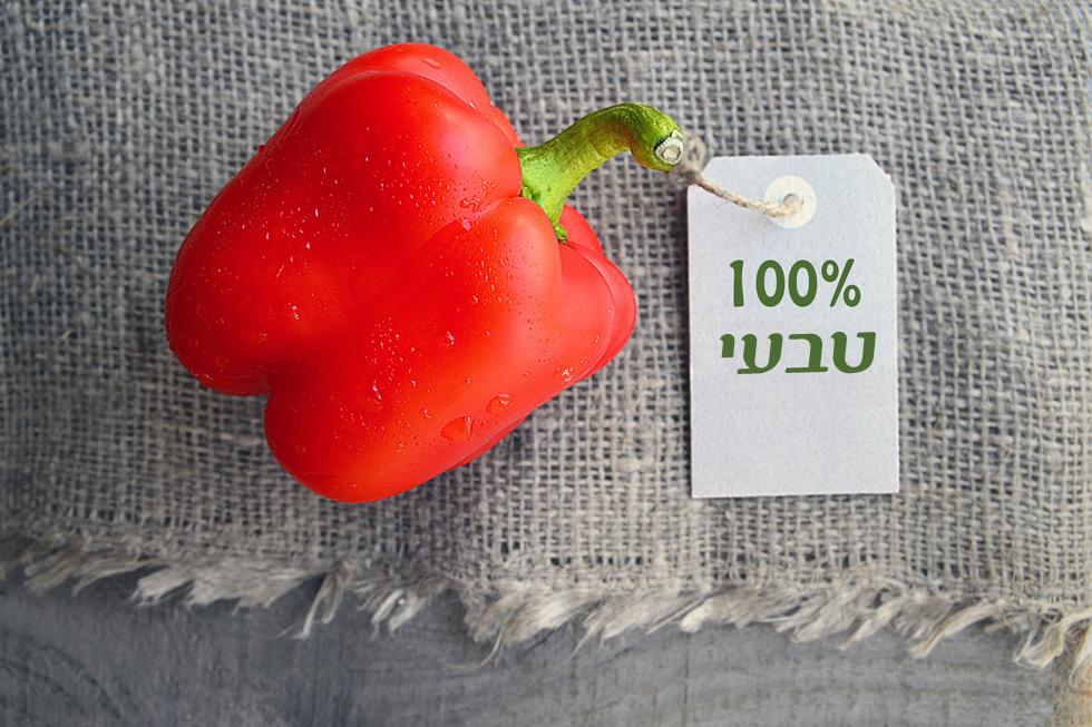 לחצו על התמונה כדי להגיע לכתבה (צילום: Shutterstock)