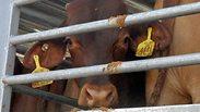 צילום: אנונימוס לזכויות בעלי חיים