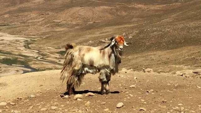 (צילום: Marjan Mashkour)