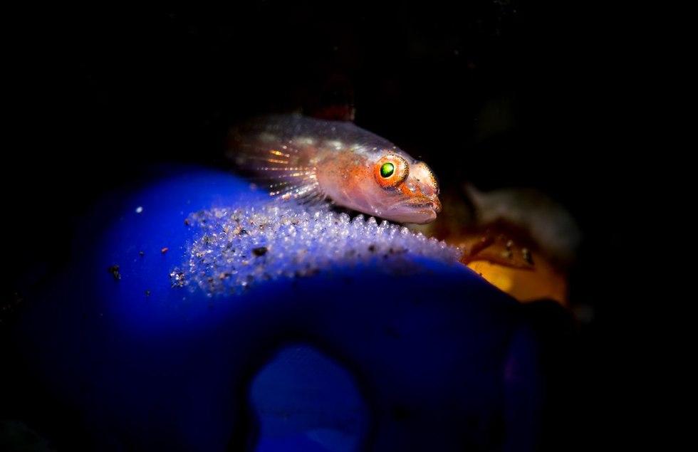 דג עם ביצים (צילום: shutterstock)