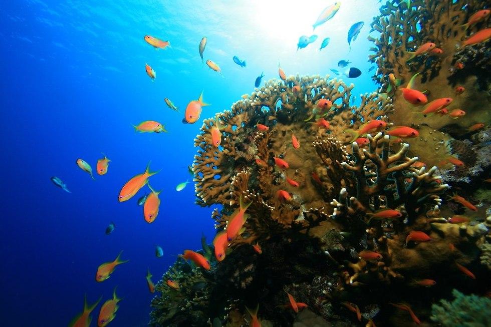שונית אלמוגים (צילום: shutterstock)