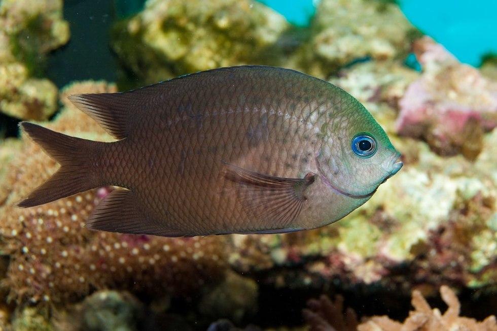דג שונית (צילום: shutterstock)