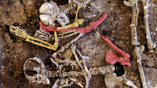 טבח תקופה ניאוליתית גרמניה הלברשטאדט ארכיאולוגיה עצמות ()