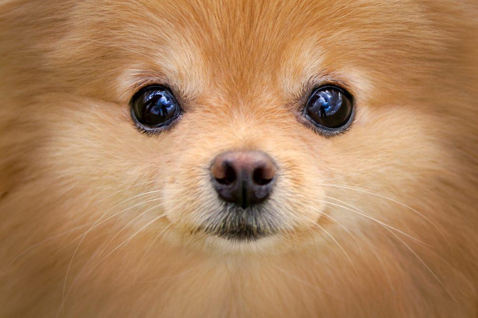 הכלבה לילי (צילום: Elinor Roizman, Dog-ma photography)