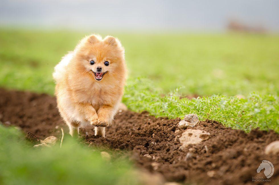 כלב בשדה (צילום: Elinor Roizman, Dog-ma photography)