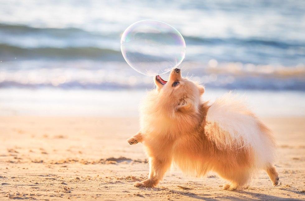 הצילום הזוכה בתחרות צלם הכלבים לשנת 2018 בקטגוריית משחקי כלבים (צילום: Elinor Roizman, Dog Photographer of the Year 2018)