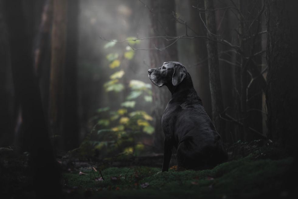 הזוכים בתחרות צילום כלבים בבריטניה (צילום: Monica van der Maden ©   Dog Photographer of the Year 2018)