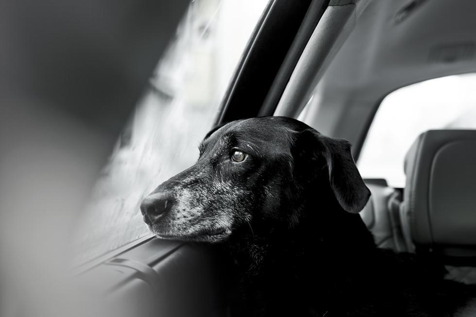 הזוכים בתחרות צילום כלבים בבריטניה (צילום: Rachele Z. Cecchini © Dog Photographer of the Year 2018)