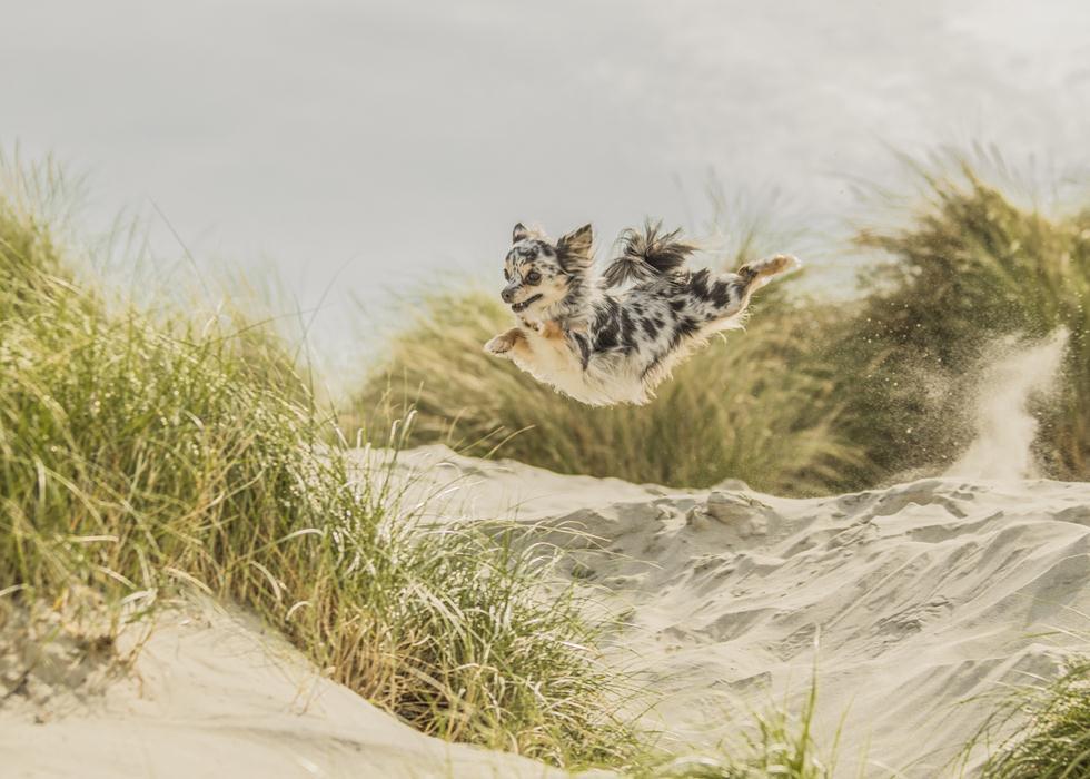 הזוכים בתחרות צילום כלבים בבריטניה (צילום: Steffi Cousins ©   Dog Photographer of the Year 2018)