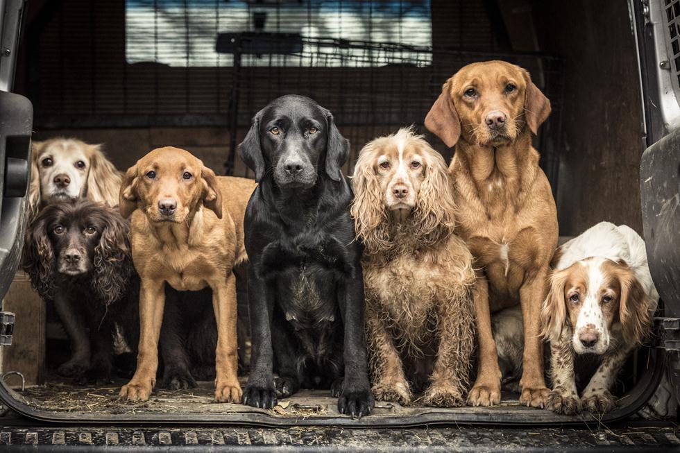 הזוכים בתחרות צילום כלבים בבריטניה (צילום: Tracy Kidd ©   Dog Photographer of the Year 2018)