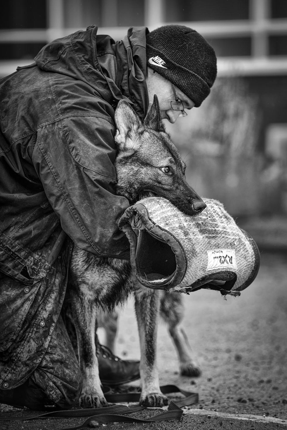הזוכים בתחרות צילום כלבים בבריטניה (צילום: Ian Squire ©   Dog Photographer of the Year 2018)