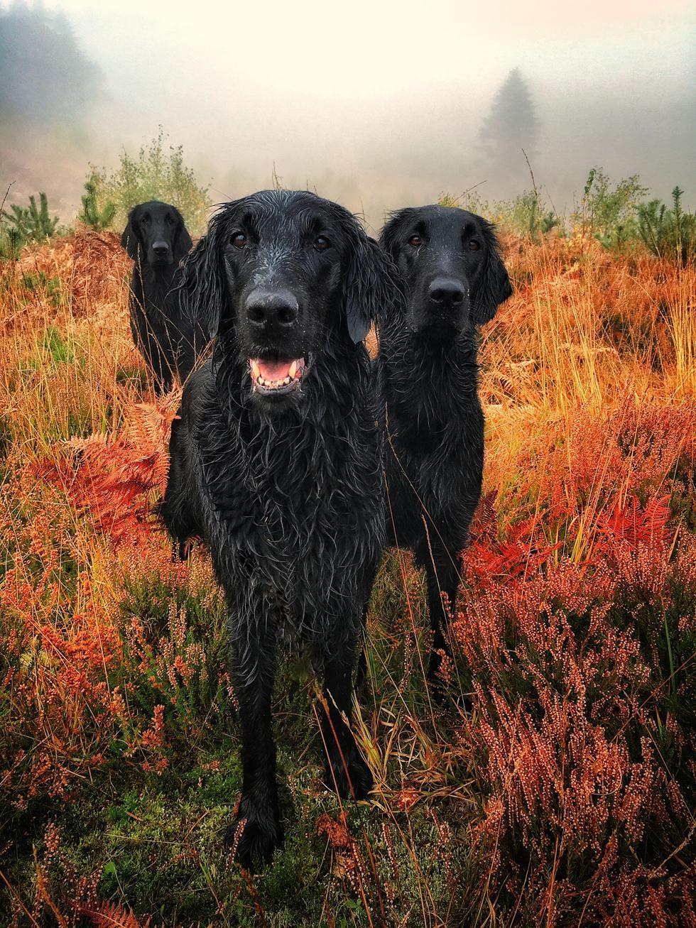 הזוכים בתחרות צילום כלבים בבריטניה (צילום:  Carol Durrant ©   Dog Photographer of the Year 2018)