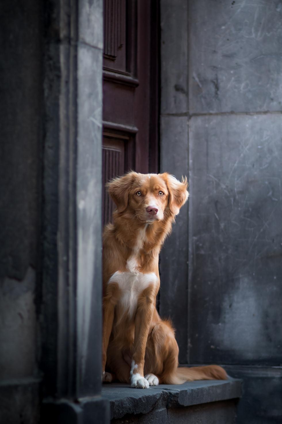הזוכים בתחרות צילום כלבים בבריטניה (צילום: Katarzyna Siminiak ©   Dog Photographer of the Year 2018)