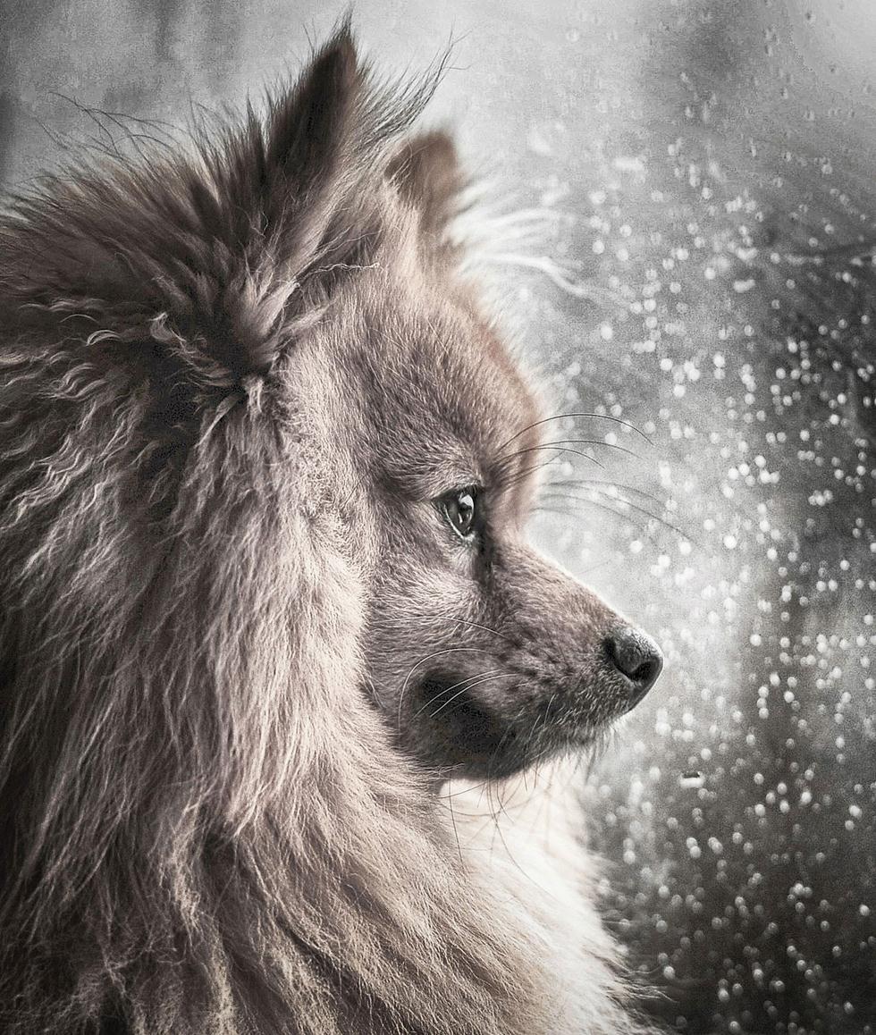 הזוכים בתחרות צילום כלבים בבריטניה (צילום: Michael M Sweeney ©   Dog Photographer of the Year 2018)