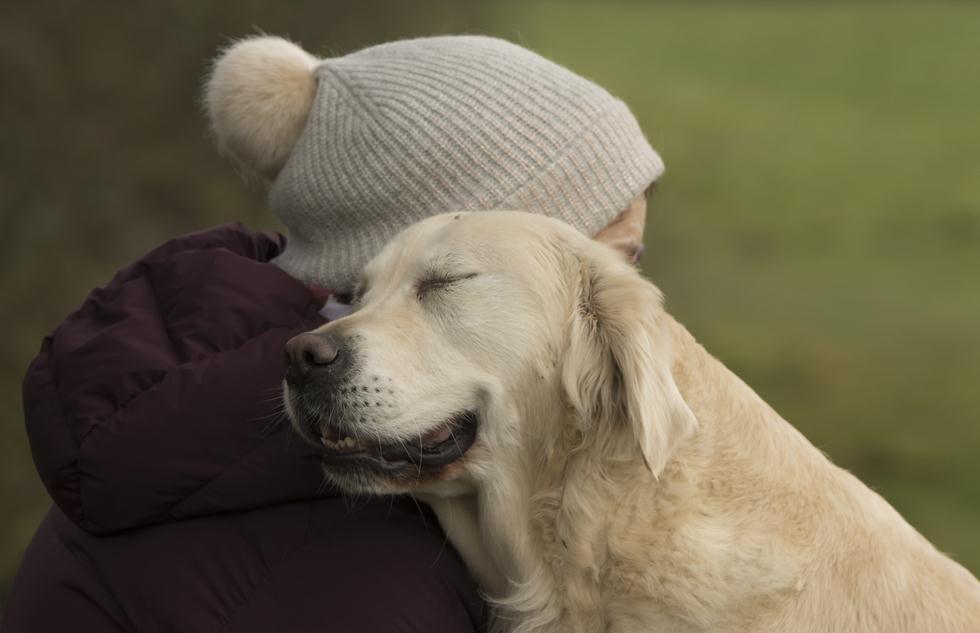 הזוכים בתחרות צילום כלבים בבריטניה (צילום: Cheryl Murphy ©   Dog Photographer of the Year 2018)