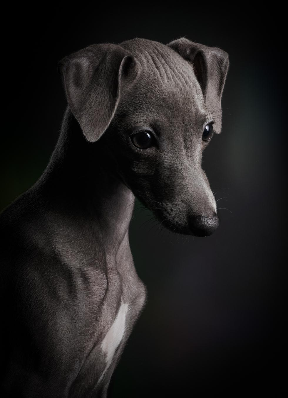 הזוכים בתחרות צילום כלבים בבריטניה (צילום:  Klaus Dyba ©   Dog Photographer of the Year 2018)