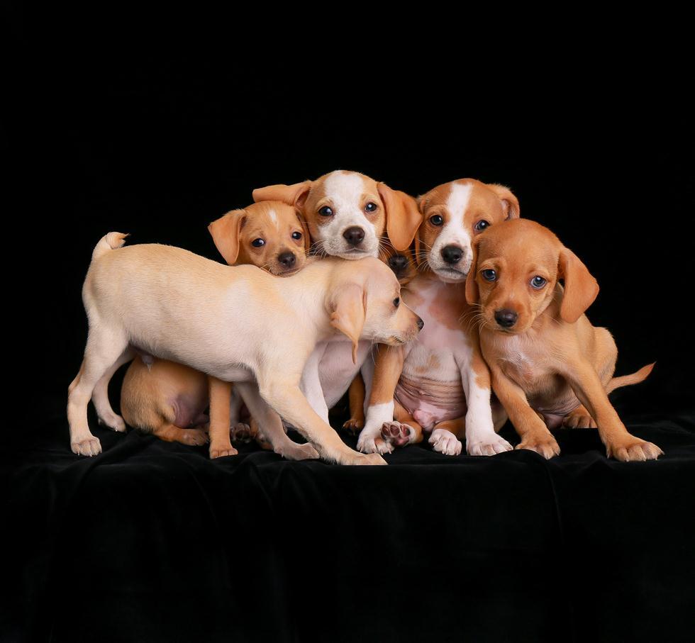 הזוכים בתחרות צילום כלבים בבריטניה (צילום: Charlie Nunn ©   Dog Photographer of the Year 2018)