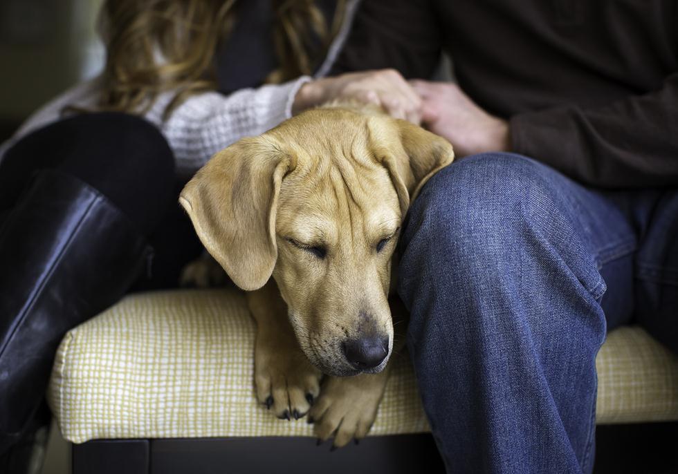 הזוכים בתחרות צילום כלבים בבריטניה (צילום: Sonya Kolb ©   Dog Photographer of the Year 2018)