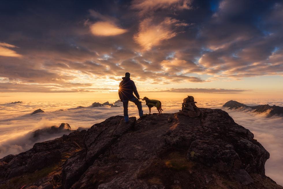הזוכים בתחרות צילום כלבים בבריטניה (צילום: name name   Dog Photographer of the Year 2018)